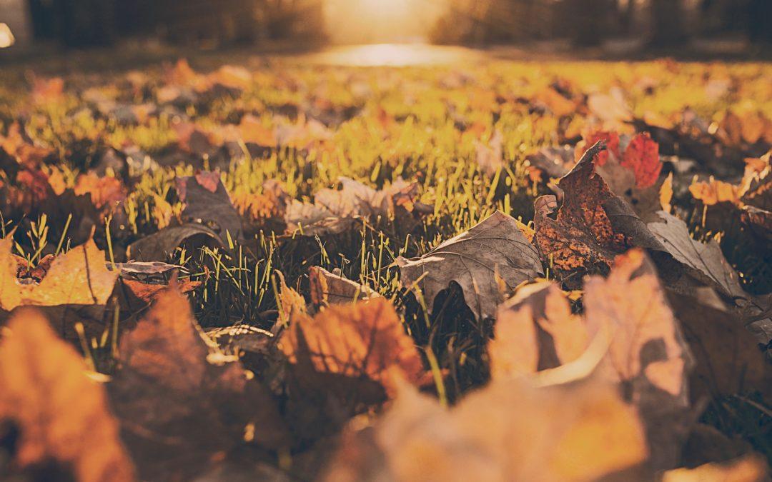 efterårsferie aktiviteter