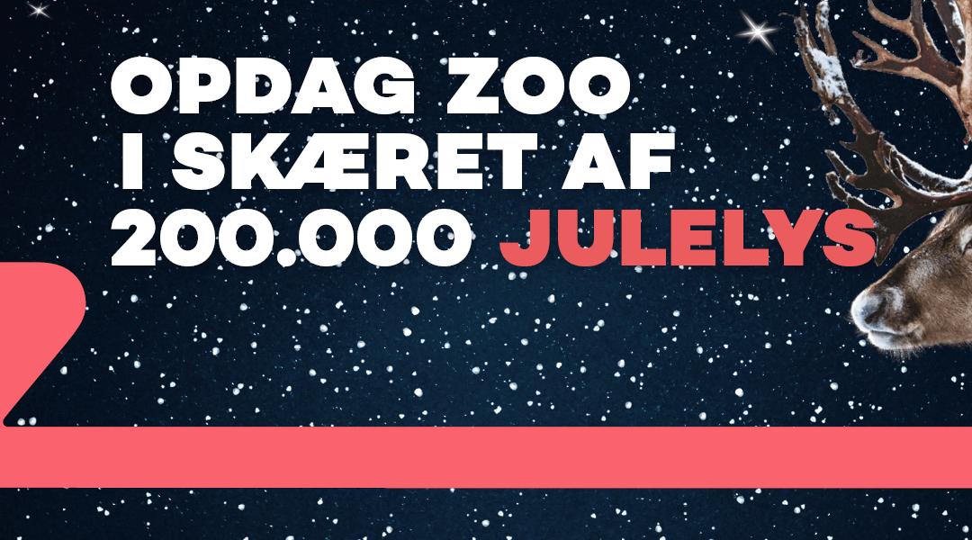 jul i ZOO – OPDAG ZOO I SKÆRET AF 200.000 JULELYS