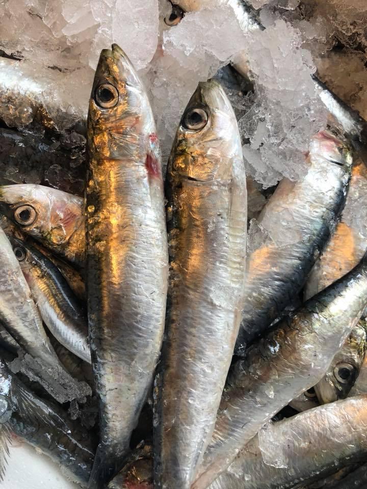 fisk frederiksberg københavn